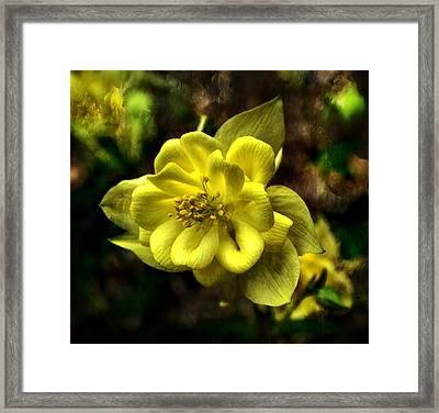 Evening Floral Framed Print by Deena Stoddard