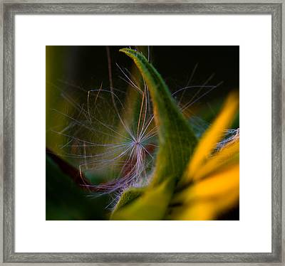 Evening Fluff Framed Print