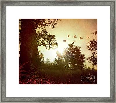 Evening Flying Geese Framed Print by Peter Awax