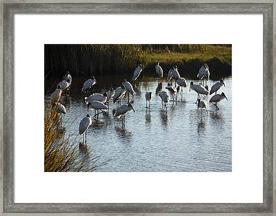 Evening Gathering Framed Print by Suzanne Gaff