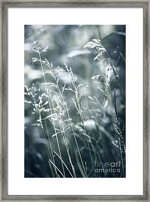Evening Grass Flowering Framed Print by Elena Elisseeva