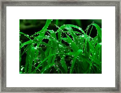 Evening Grass Framed Print by Utkarsh Solanki