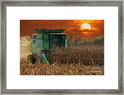Evening Harvest Framed Print