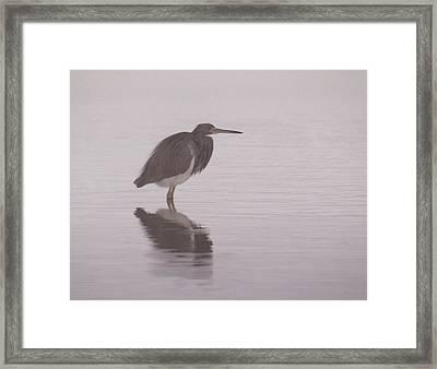 Evening Heron Framed Print