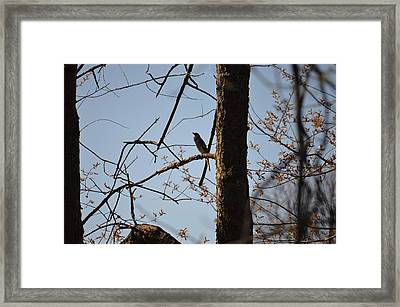 Evening Joy For Jay Framed Print by Sonali Gangane
