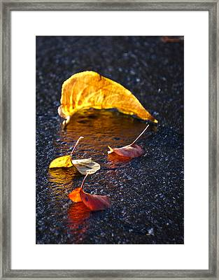 Evening Leaves On Wet Pavement Framed Print by Ronda Broatch