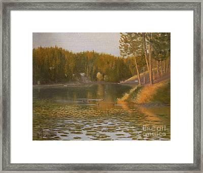 Evening Light On Avondale Framed Print