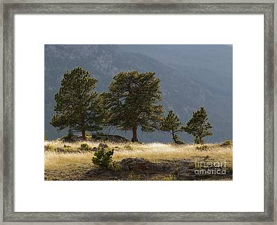 Evening Light On The Meadow Framed Print