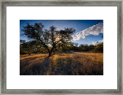 Evening Light Framed Print by Peter Tellone