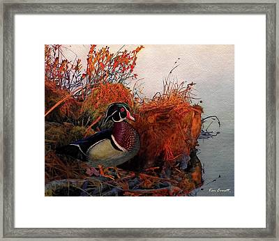 Evening Light Wood Duck Framed Print by Ken Everett