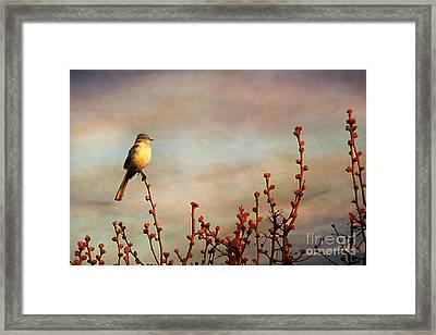 Evening Mocking Bird Framed Print by Darren Fisher