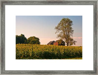 Evening On The Sunflower Farm Framed Print
