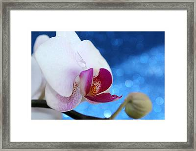 Evening Orchid Framed Print