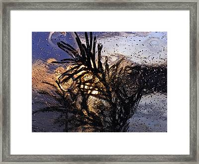 Evening Plant Framed Print