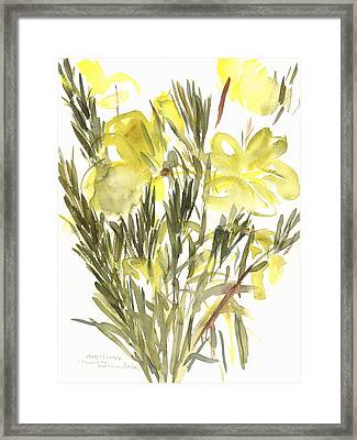 Evening Primroses Framed Print by Claudia Hutchins-Puechavy