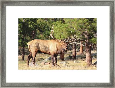 Evening Roundup Framed Print