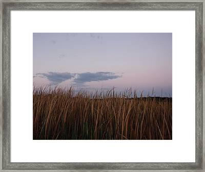 Evening Rushes Framed Print by Amanda Holmes Tzafrir