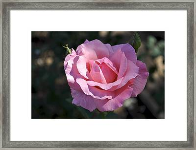 Framed Print featuring the photograph Evening Shadow by Sandy Molinaro