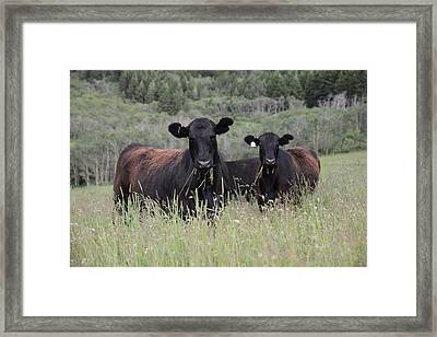 Evening Snack Framed Print by Jenessa Rahn