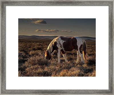 Evening Solitude In Sand Wash Basin Framed Print
