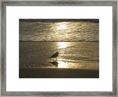 Evening Stroll For One Framed Print