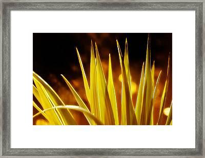 Evening Sun Framed Print by Brenda Bryant