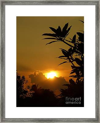 Evening Sun Framed Print