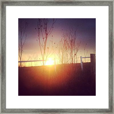 Evening Sun Framed Print by Tara Harper