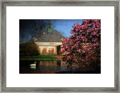 Evening Swan Framed Print by Mary Timman