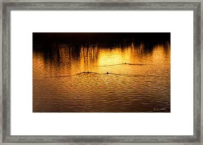 Evening Swim Framed Print by Jardi Welsch