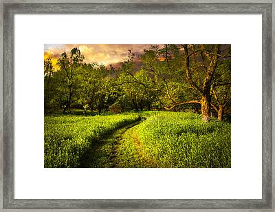 Evening Trail Framed Print by Debra and Dave Vanderlaan