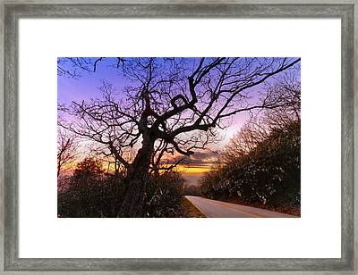 Evening Tree Framed Print