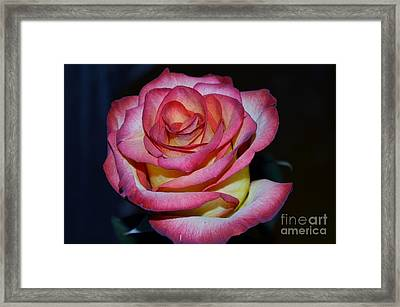 Event Rose Too Framed Print