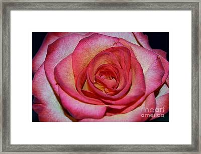 Event Rose Framed Print
