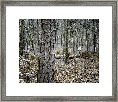 Ever Feel Like You're Being Watched Framed Print