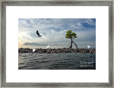 Framed Print featuring the photograph Everglade Scene by Dan Friend