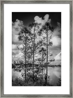 Everglades 0336bw Framed Print