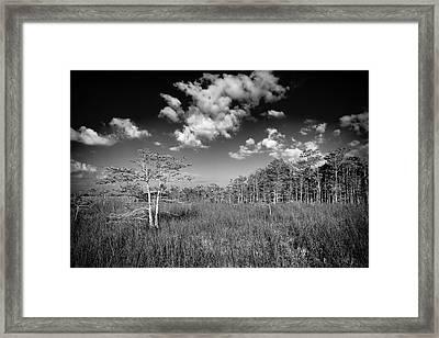 Everglades 9574bw Framed Print