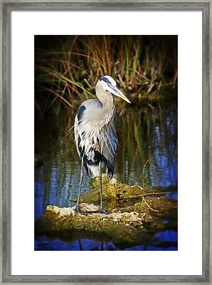 Everglades Blue Framed Print by Marty Koch