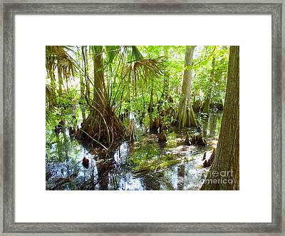 Everglades Framed Print by Carey Chen
