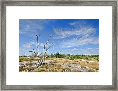 Everglades Coastal Prairies Framed Print by Rudy Umans