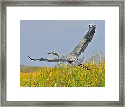 Everglades Flight Framed Print
