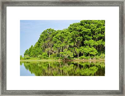 Everglades Florida Framed Print by Michael Defreitas
