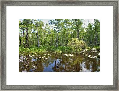 Everglades Lake Framed Print by Rudy Umans