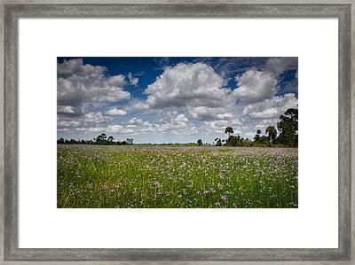 Everglades Spring Framed Print