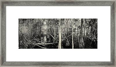 Everglades Swamp-1bw Framed Print by Rudy Umans