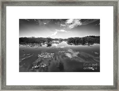 Everglades Swamp 2 Framed Print by Eyzen M Kim
