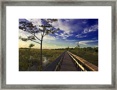 Everglades  Framed Print by Swank Photography