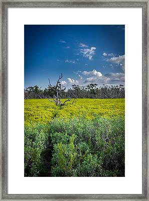 Everglades Tree Framed Print