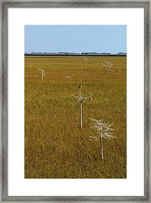 Everglades View Framed Print by Daniel Woodrum